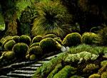 Round Cactuses