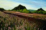 Meadows Purple